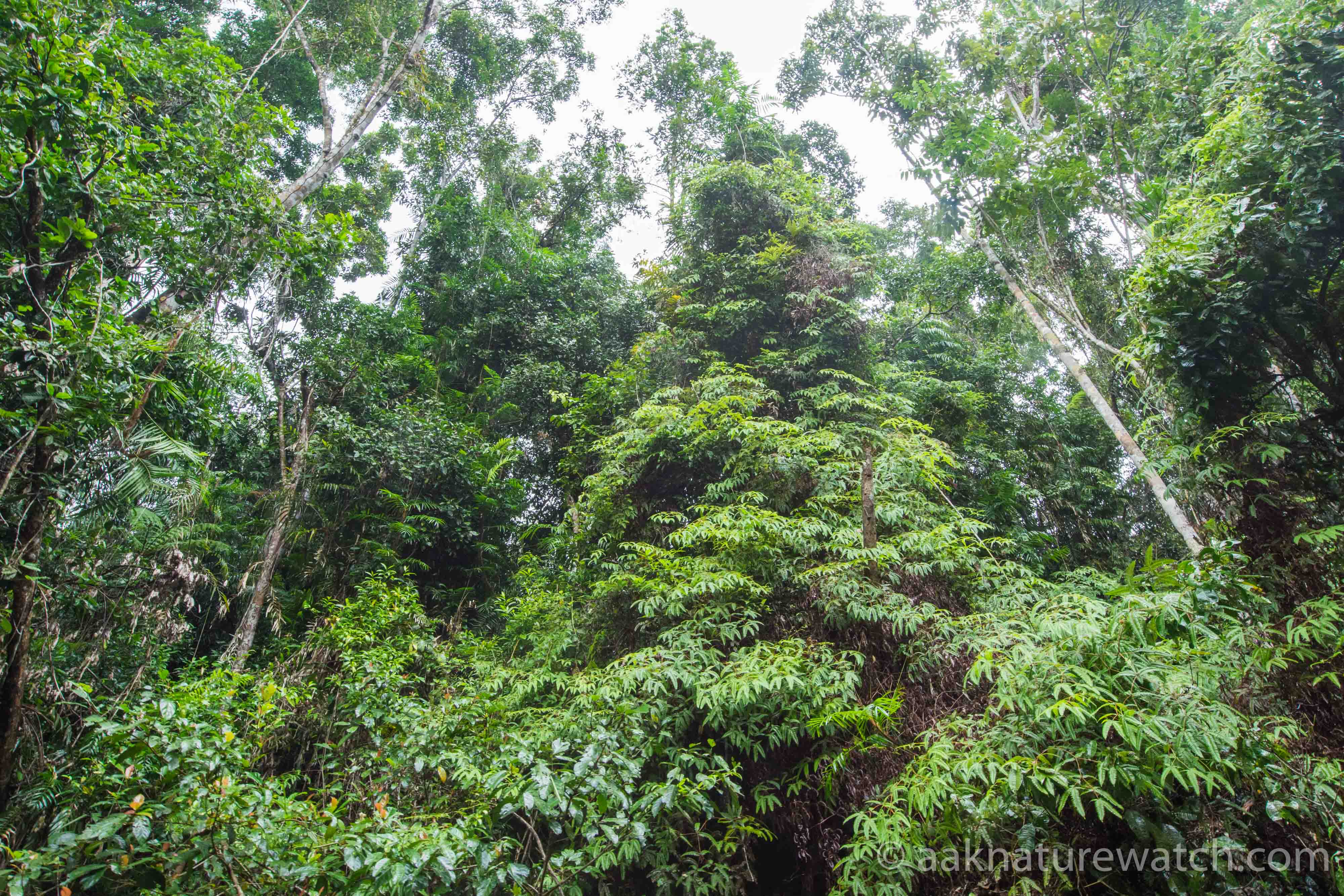 Lowland Rainforest