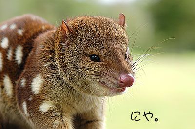 northernquoll by cairnspost