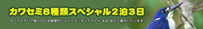 カワセミ8種類スペシャル2泊3日