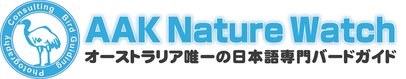 オーストラリア唯一の日本語専門バードウォッチングガイドサービス【AAK Nature Watch】